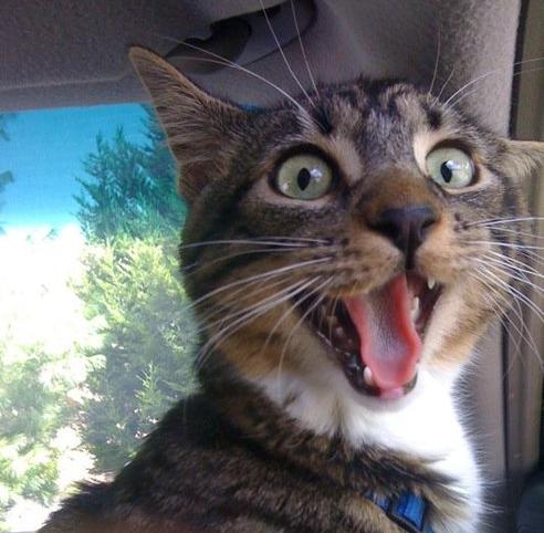 o que deixa um gato feliz portal medicina felina